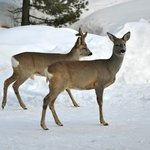 Naturschutzzone Wildbeobachtungen