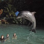 Fun swimming with the dolphins