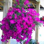 Bilde fra 3398462
