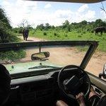 Encountering elephants on the road