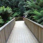 Fern Glade Reserve
