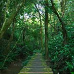 Trail in the Rainforest