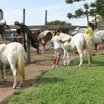 Natural Horsemanship & Pony riding lessons