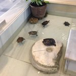 Turtle family in the foyer of the hotel