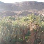vue sur l'oasis
