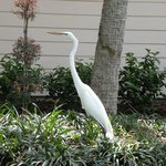 Wildlife on the resort grounds. Always fascinating to watch.