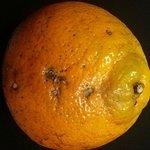 Bug orange from Cushman's