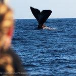 Inia 1 Spermwhale