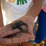 Releasing a baby Turtle into the Ocean!