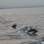 Dolphins following our boat on way back