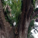 palm tree in tree