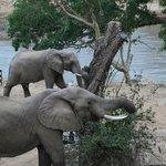 2 olifanten kwamen  de bomen snoeien