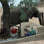 Deze olifanten hielden Kim en Remco vast op de braaiplaats