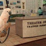 Great educational bird show
