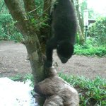 Monkey messing with Sloth