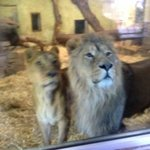 Upclose with the lions