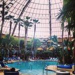 Harrahs Pool- Daytime