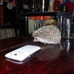 Lily at the bar