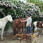 Horses and dogs wander around the farm free