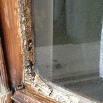 rotten windows