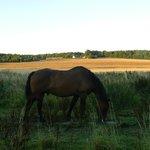 Notre cheval au pré