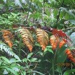 Orange leaves in the rainforest