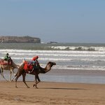 Camels on the beach!