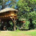notre cabane Zoé