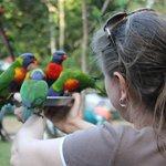 Don't be bird phobic