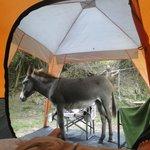 Cute donkey !