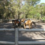 The lovely horses ready for your ride.