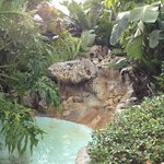 A fountain outside our room attracted parrots in the a.m.
