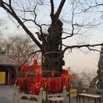 ритуальные деревья в Jietai Temple