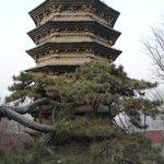 одна из самых старых пагод в Jietai Temple