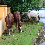 Horses Outside Our Gate