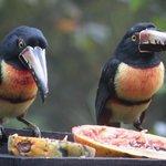 Montana birders