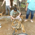 Tiger Temple Thailand Tour Foto
