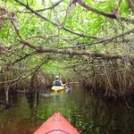 Navigating through a mangrove tunnel