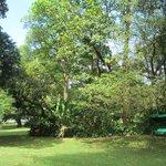 Trees at B&B