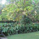 Park Eden garden