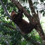 sloth on a tree next to the jacuzzi
