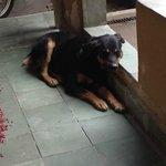 lucky le chien de la famille (tres gentil et docile)