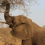 Might Elephant