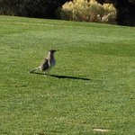 #8 From the Tee - Local Inhabitant - PLAYING THORUGH BUDDY!!