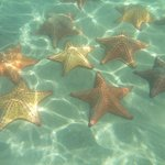 starfish colony during boat tour