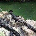 Coin alligators, intéressant