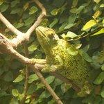 My kids called this Chameleon 'Rango'