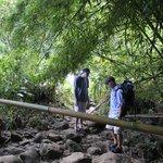 Bamboo forest trek