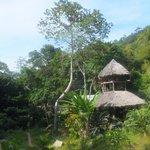 djungle house