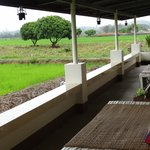 The balcony overlooking the rice paddies (in bloom in March).
